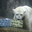 Stock Photo: Polar Bear with Christmas gifts