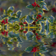 Stock Photo: Chrismtas Holly reflection in water