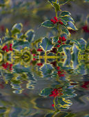 Chrismtas Holly reflection in the water — Stock Photo
