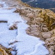 Stock Photo: BacteriPattern - Yellowstone in Winter