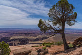 Grand View Point Overlook — Stock Photo