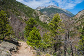 Fern Lake Trail with Stones Peak Mountain in the background — Stock Photo