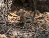 Cute little Chipmunk — Photo