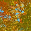 Autumn Background — Stock Photo #7774730