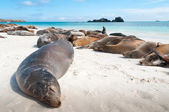 Sleeping sea lions Galapagos — Stock Photo
