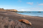 Bartolome island galapagos with sleeping sealion. — Stock Photo