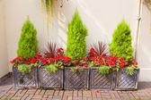 Disposizione giardino cortile di fioriere — Foto Stock