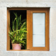 Wooden framed window with potted plant — Stock Photo