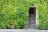 Steps behind iron grill surrounded by green shrubbery. — Stock Photo