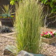 Stock Photo: Ornamental grass in gravel bed and rockery