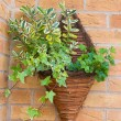 Stock Photo: Wall mounted wicker basket containing plants