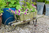 Trailing surfina petunias in a wooden wheelbarrow. — Stock Photo