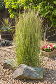 Ornamental grass in a gravel bed and rockery — Stock Photo