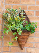 Wall mounted wicker basket containing plants — Stock Photo