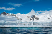 Gentoo penguins on iceberg Antarctica — Stock Photo