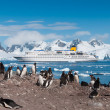 Antarctica penguins and cruise ship — Stock Photo