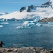 Antarctica with snow covered mountains and single gentoo penguin — Stock Photo