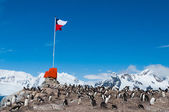 Chilean base Antarctica flag flying — Foto de Stock