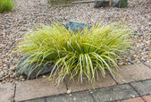 Ornamental grass set in rockery — Stock Photo