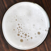 Beer foam — Stock Photo