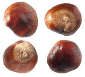 Chestnuts set — Stock Photo