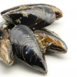 Mussels in the shell — Stock Photo