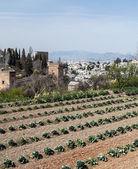 Alhambra-turm — Stockfoto