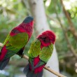 Stock Photo: Tropical birds