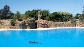 Delfíni — Stock fotografie