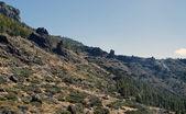 Vegetation in the Teide — Stock Photo