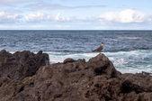 Pláž s ptákem — Stock fotografie