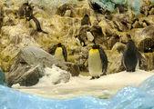 Pingüinos — Foto de Stock