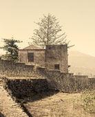 Doead drzewo — Zdjęcie stockowe