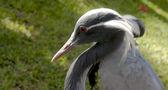 Testa di uccello — Foto Stock