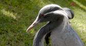 Cabeza de pájaro — Foto de Stock