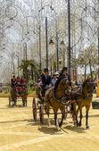 Trasporto di cavalli — Foto Stock