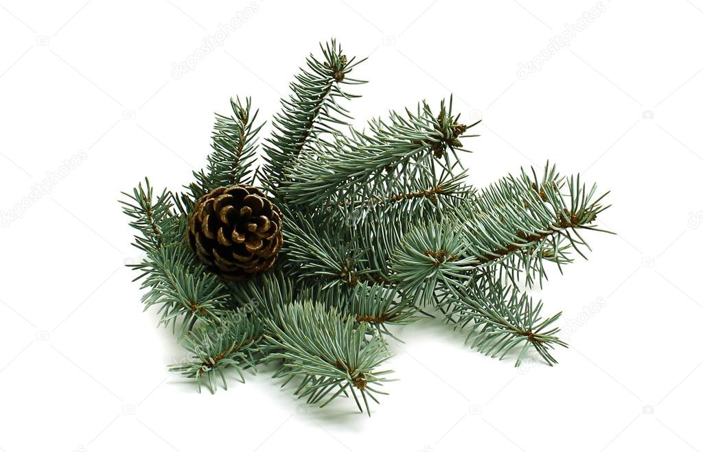 Christmas tree with pinecone isolated on white background  Stock Photo #16387911