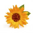 Close-up of calendula flower with leaves. — Stock Photo #28341171