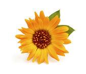 Close-up of calendula flower with leaves. — Stock Photo