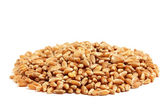 Refined grains of wheat . — Stock Photo