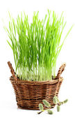 Basket with grass and pussy-willow twig. — Stock Photo