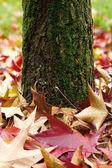 Höstens trädstam och blad — Stockfoto