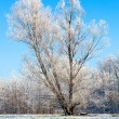 Winter Lonely Tree — Stock Photo #34454943