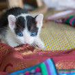 Kitten — Stock Photo #30420883