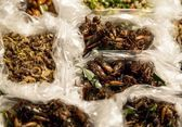 Fried insects in plastic bags — Stock Photo