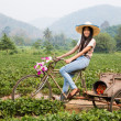 Thai girl on the strawberry field — Stock Photo