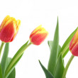 Red and yellow tulips isolated on white — Stock Photo #12562550