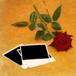Stock Photo: Dark red rose aon old photos on wood
