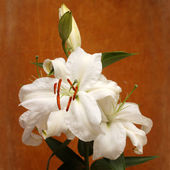 White lilies on wooden background — Stock Photo