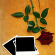 Dark red rose and old photos on wood — Stock Photo